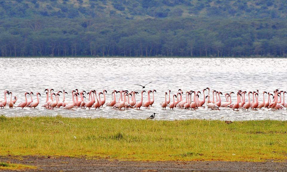 Park Narodowy Nakuru